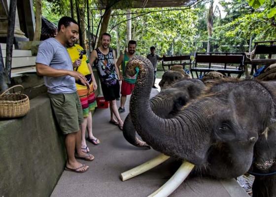 Nusabali.com - pandemi-gajah-makan-tabungan-perusahaan