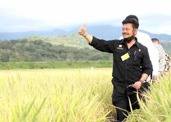 Nusabali.com - data-statistik-penting-bagi-pertanian