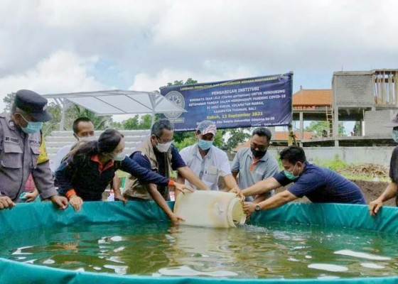 Nusabali.com - unud-dukung-ketahanan-pangan-desa-kukuh-melalui-budidaya-ikan-lele-dan-hidroponik