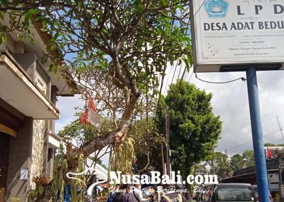 Nusabali.com - lpd-bedulu-tunggu-hasil-audit