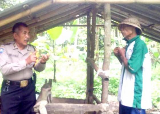 Nusabali.com - maling-sapi-sasar-petang-bikin-warga-resah