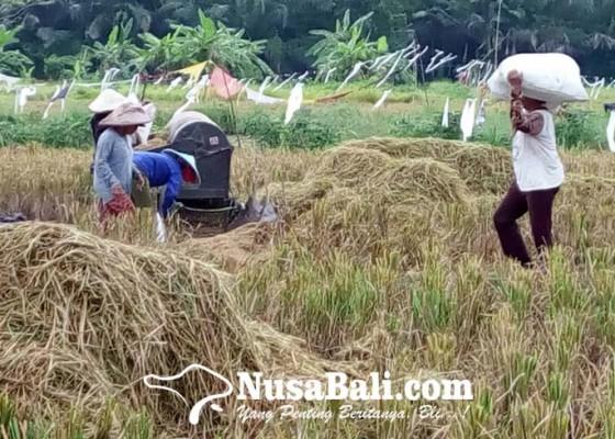 Nusabali.com - ntp-petani-bali-naik-tipis-012-persen-di-bulan-september-masih-jauh-dari-untung