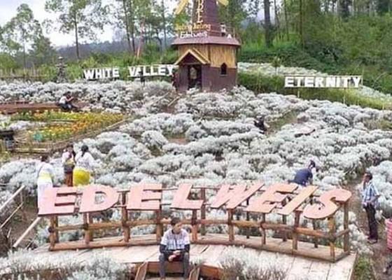 Nusabali.com - taman-edelweis-bali-sediakan-tempat-untuk-event-kesenian