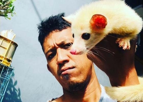 Nusabali.com - awalnya-piara-gecko-kini-jadi-pedagang-aneka-reptil-dengan-omzet-menggiurkan