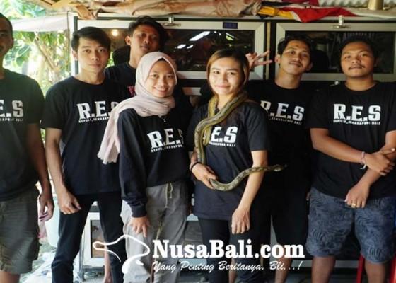 Nusabali.com - komunitas-res-wadahi-penggemar-reptil-di-klungkung