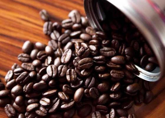 Nusabali.com - kopi-robusta-buleleng-digarap-secara-holistik