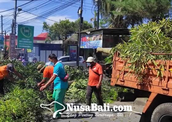 Nusabali.com - dlh-bangli-tebang-ratusan-pohon-perindang