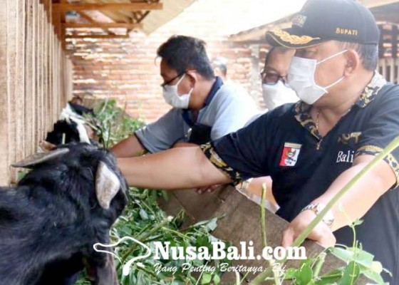 Nusabali.com - 7-kelompok-tani-ternak-digelontor-bantuan-308-ekor-kambing