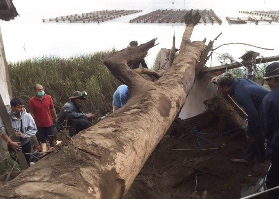 Nusabali.com - four-people-buried-in-trunyan-following-earthquake-triggered-landslide