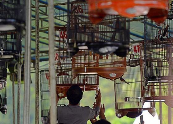 Nusabali.com - kontes-burung-kicau-diusulkan-jadi-cabor-pon-xxi