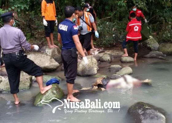 Nusabali.com - mayat-silke-braun-dalam-kondisi-terikat-tali-di-leher-tangan-dan-kaki