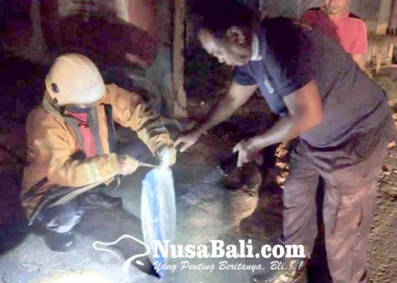 Nusabali.com - petugas-damkar-evakuasi-sarang-tawon