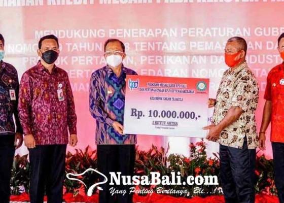 Nusabali.com - koster-minta-staf-bupati-konsumsi-uyah-amed