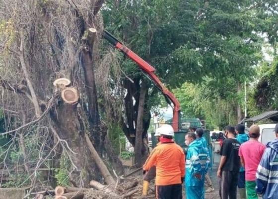 Nusabali.com - antisipasi-tumbang-dinas-lh-petakan-perompesan-pohon