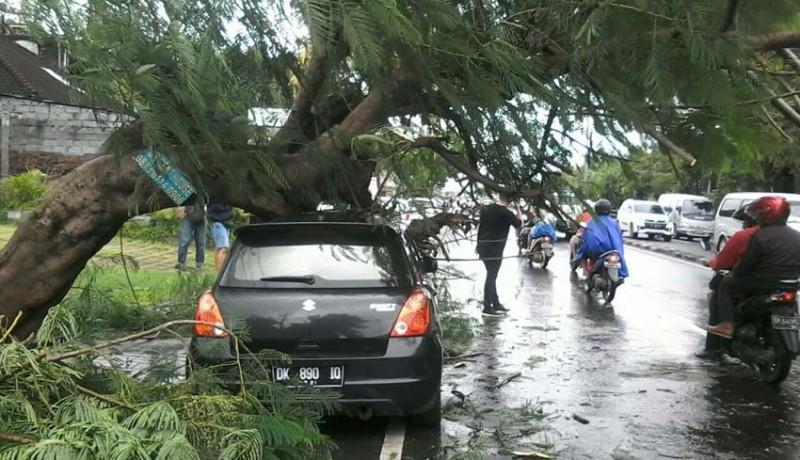 www.nusabali.com-angin-kencang-pohon-bertumbangan-di-kutsel