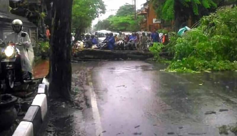 www.nusabali.com-tiga-pemotor-tertimpa-pohon-roboh-di-denpasar