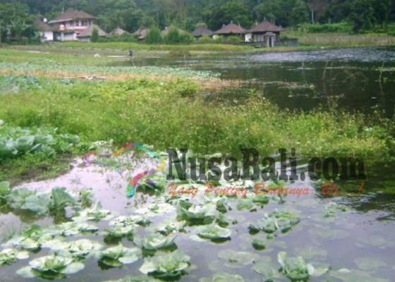 Nusabali.com - air-danau-batur-naik-puluhan-hektare-lahan-warga-terendam
