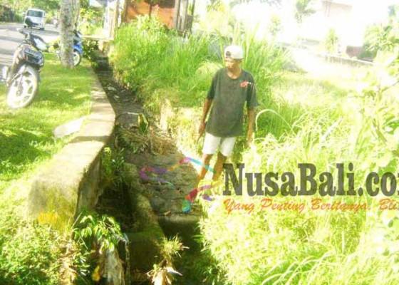 Nusabali.com - bendungan-jebol-sawah-kekeringan