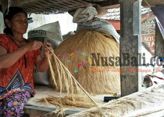 Nusabali.com - jelang-galungan-padi-bali-diburu-untuk-penjor