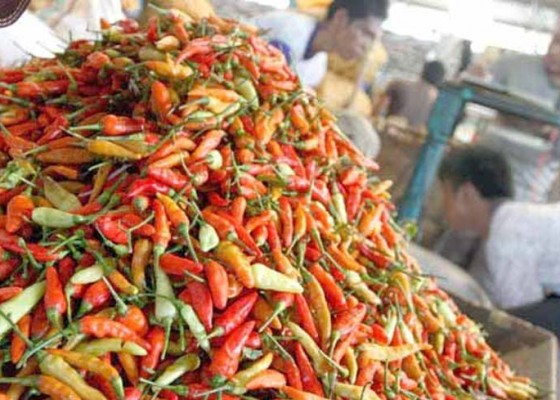 Nusabali.com - siasati-harga-cabai-hijau-dan-merah-dicampur