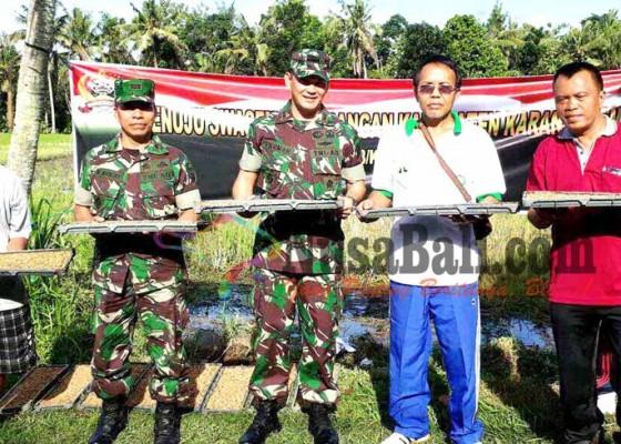 Nusabali.com - dandim-pimpin-semai-bibit-padi