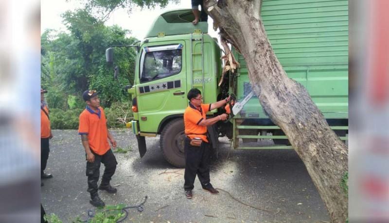 www.nusabali.com-pohon-tumbang-timpa-truk