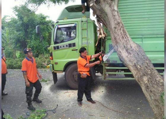 Nusabali.com - pohon-tumbang-timpa-truk