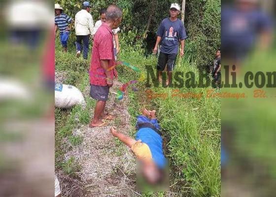 Nusabali.com - petani-tewas-tersetrum-saat-menyabit-rumput