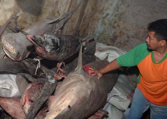 Nusabali.com - polair-amankan-kapal-bodong-muat-300-kg-hiu