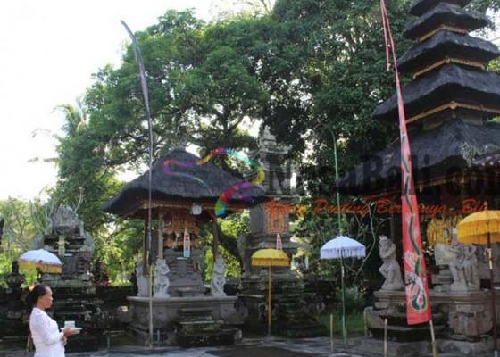 Nusabali.com - ada-mata-air-keluar-dari-akar-pohon-bertuah-lancarkan-asi