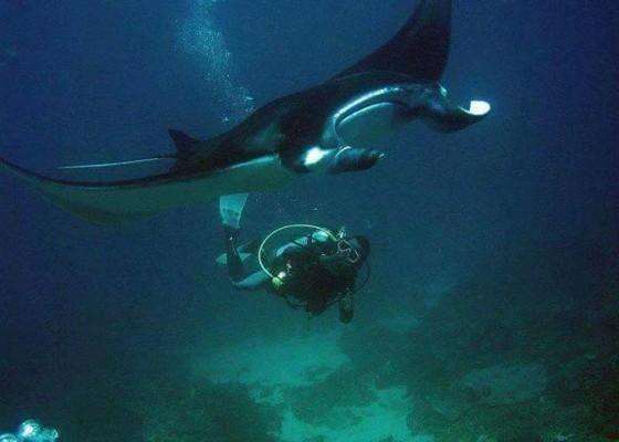 Nusabali.com - nusa-penida-minim-instruktur-diving-lokal