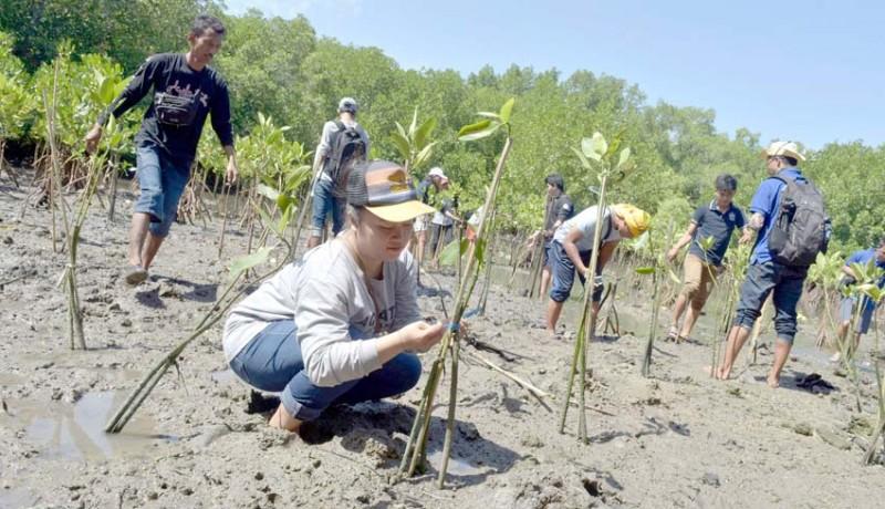 www.nusabali.com-bkipm-dan-mahasiswa-tanam-mangrove