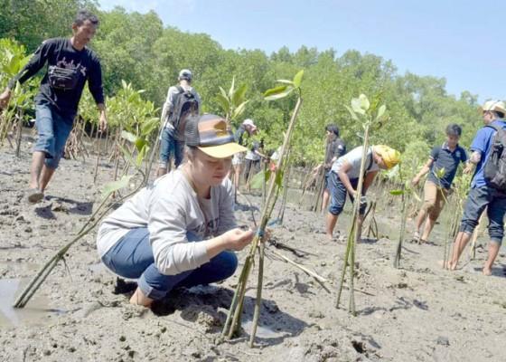 Nusabali.com - bkipm-dan-mahasiswa-tanam-mangrove