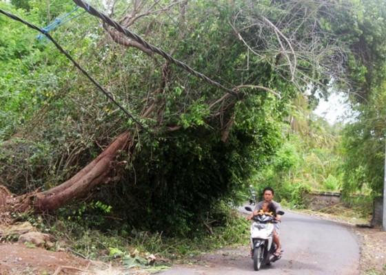 Nusabali.com - kabel-tertindih-pohon