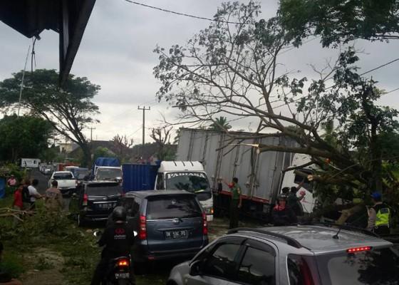 Nusabali.com - terperosok-ke-got-mobil-tertimpa-pohon