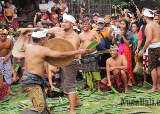 Nusabali.com - bule-pun-ikut-atraksi-perang-pandan-di-tenganan