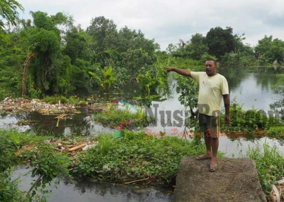 Nusabali.com - tegalan-di-kusamba-terendam-banjir