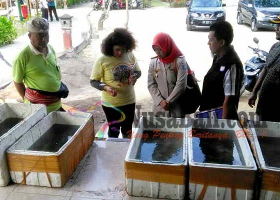 Nusabali.com - bkipm-lepasliarkan-800-spesies-koral-hasil-sitaan