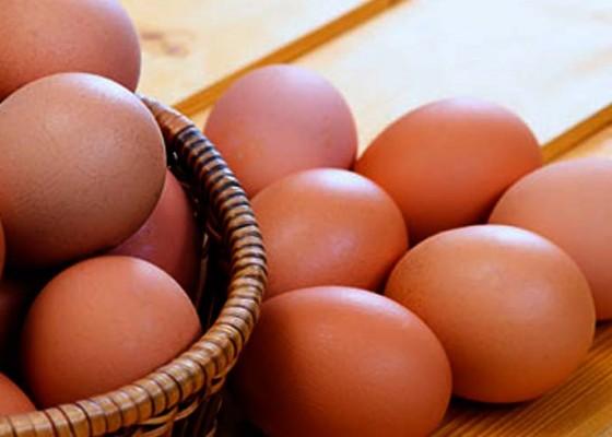 Nusabali.com - kesehatan-telur-wajib-untuk-pertumbuhan