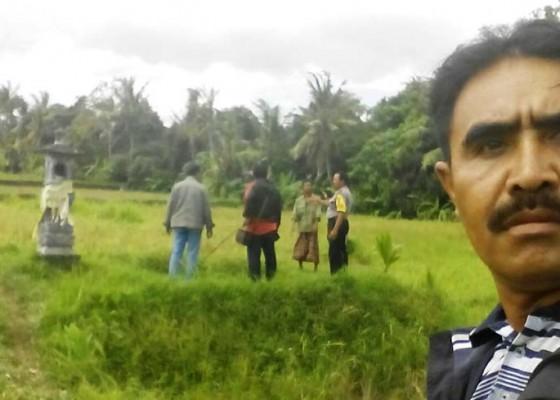 Nusabali.com - 3-ekor-sapi-hilang-petani-lapor-polisi