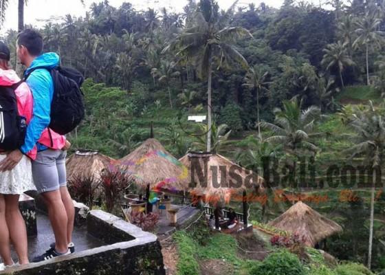 Nusabali.com - petani-pasang-seng-di-ceking