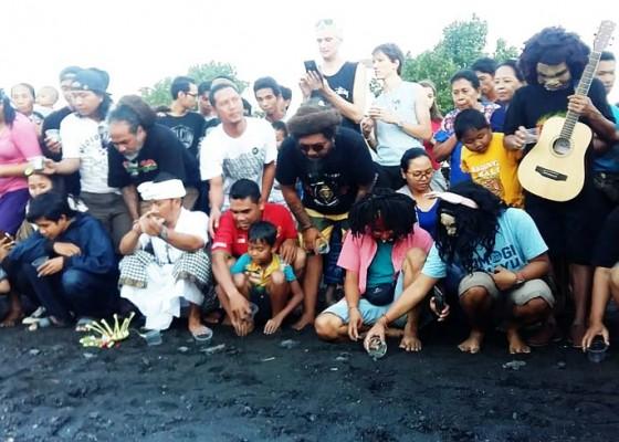 Nusabali.com - artis-dan-seniman-bali-lepas-tukik-di-pantai-penimbangan