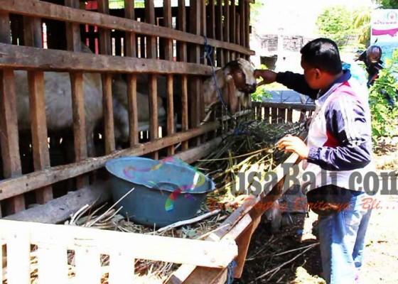 Nusabali.com - peternak-kambing-kebanjiran-pesanan