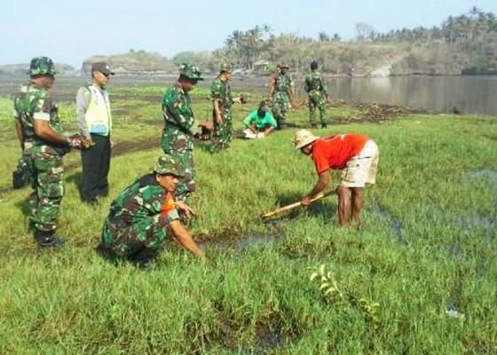 Nusabali.com - tni-tanam-mangrove-di-pantai-klecung