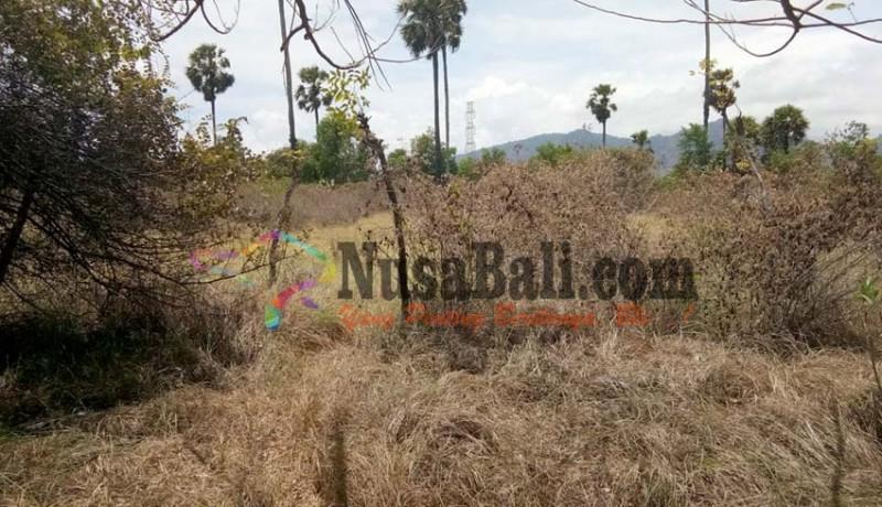www.nusabali.com-kemarau-hutan-tnbb-rawan-kebakaran