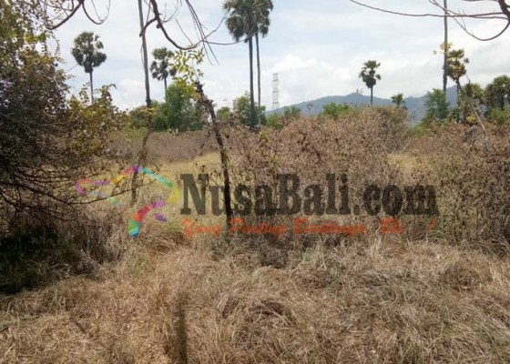 Nusabali.com - kemarau-hutan-tnbb-rawan-kebakaran