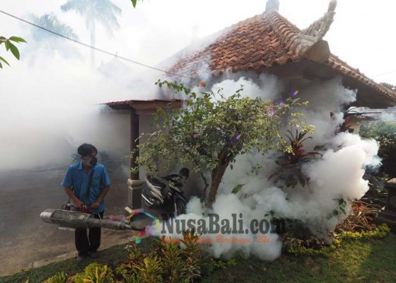 Nusabali.com - awas-demam-berdarah-merebak