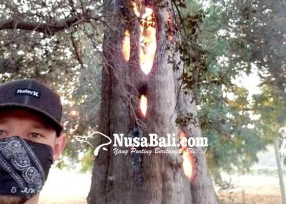 Nusabali.com - api-hanya-bakar-bagian-dalam-batang