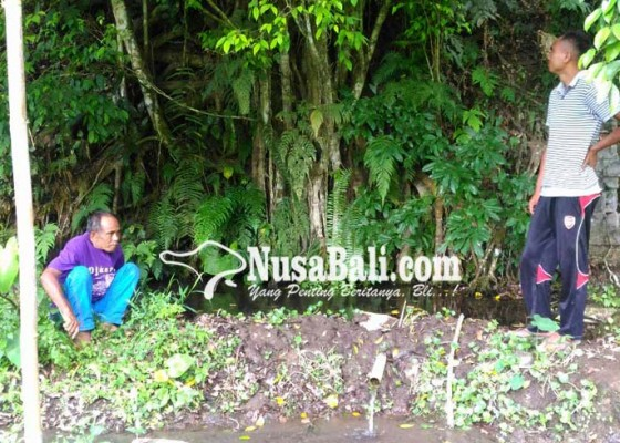 Nusabali.com - tirta-suganing-di-pupuan-sembuhkan-sakit-gendongan