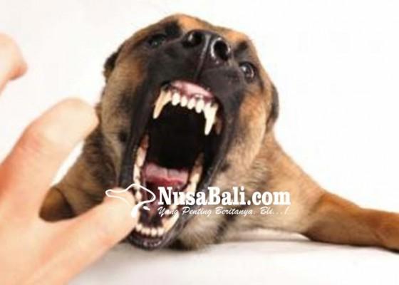 Nusabali.com - uji-sampel-rabies-belum-disimpulkan